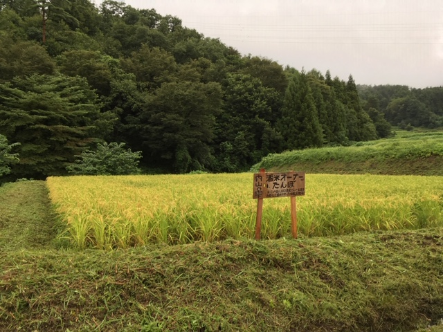 8月22日オーナー田んぼの様子1