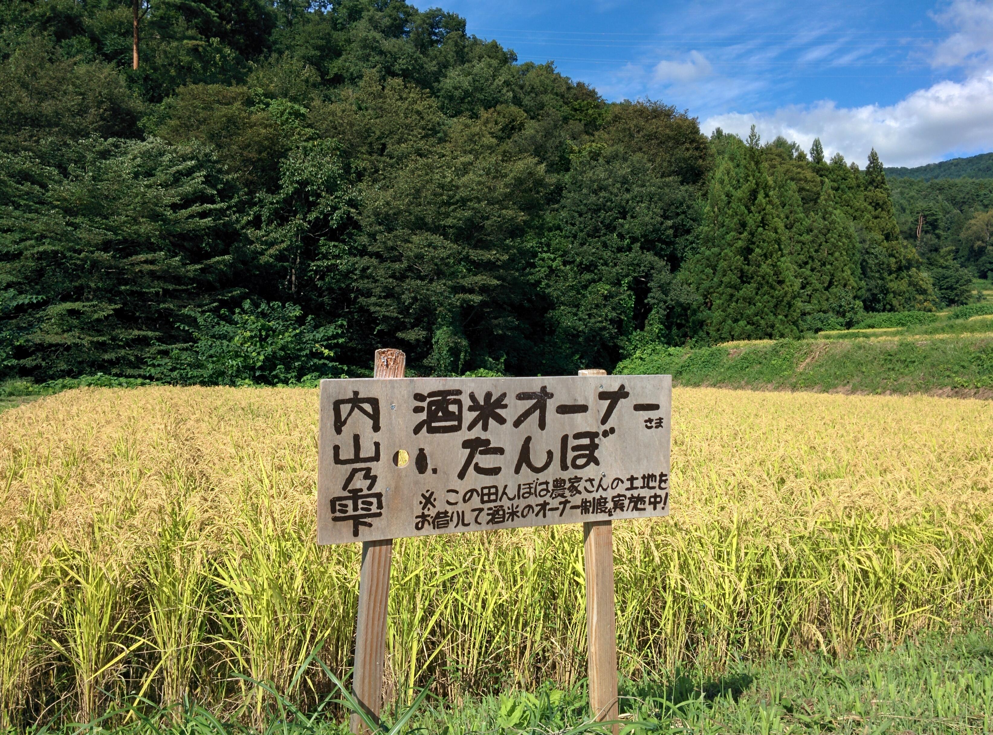 9月12日オーナー田んぼの様子3