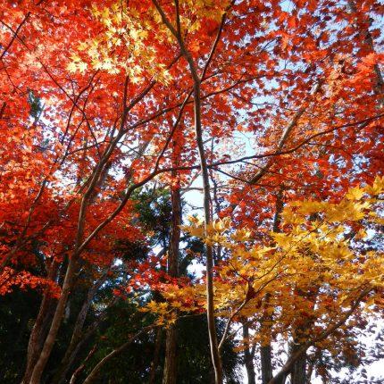 10月22日道の秘境紅葉写真