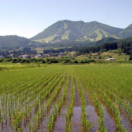 木島平村の風景 水田と高社山