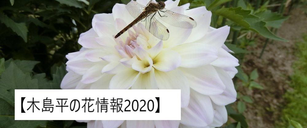 木島平の花情報2020