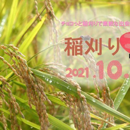稲刈コンinきじま平